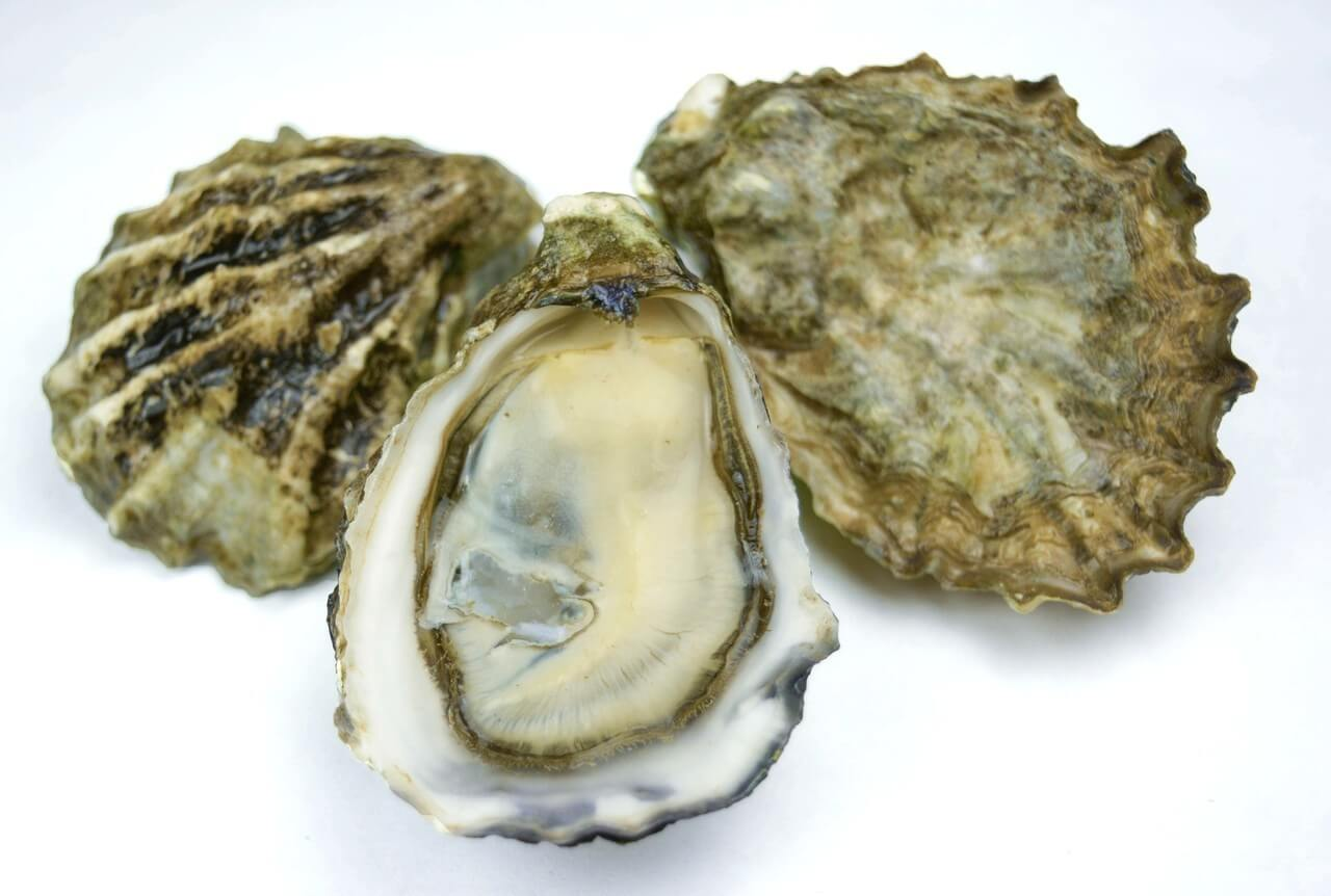 Benefits of oyster seafood