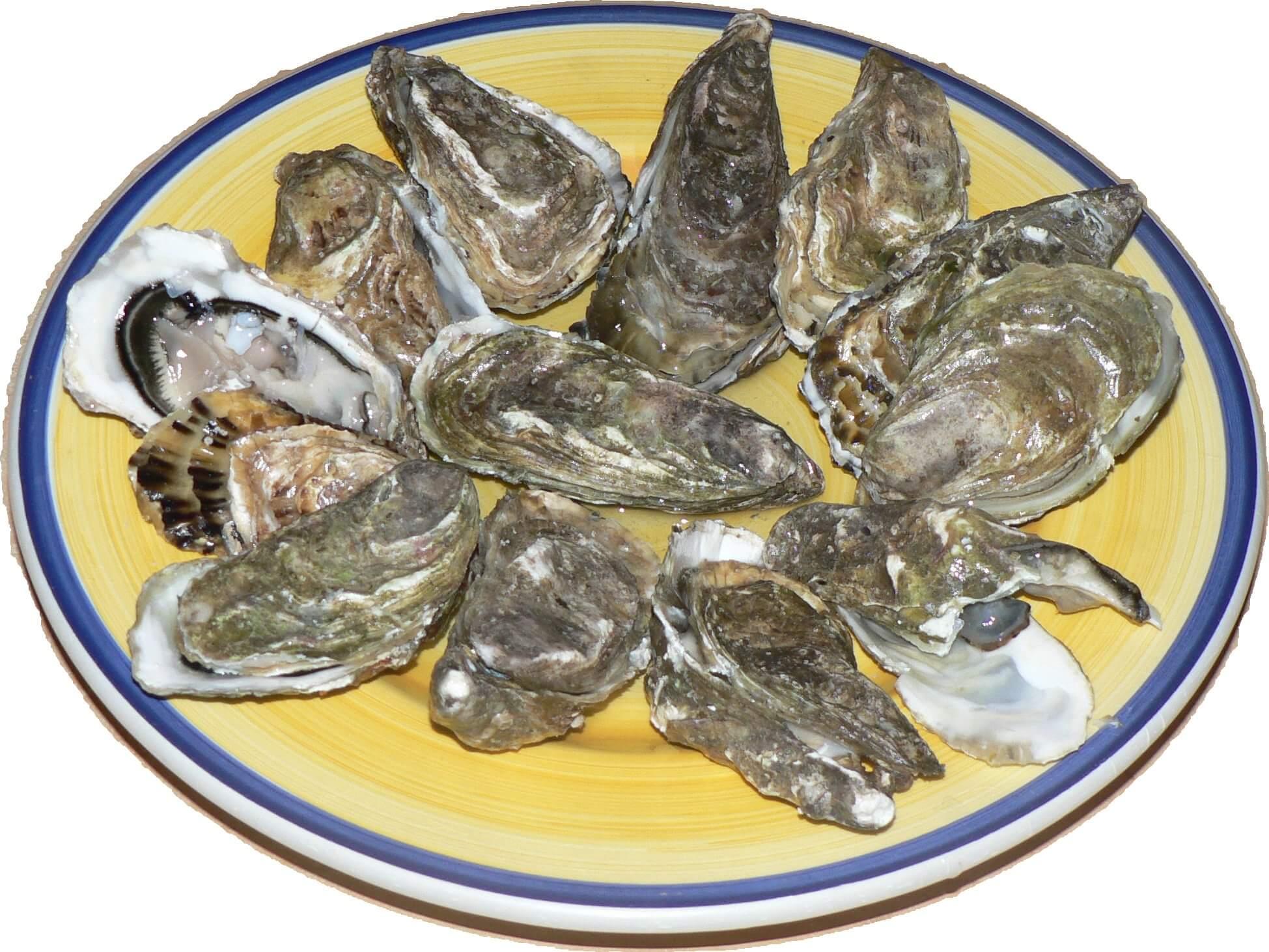 shellfish Seafood
